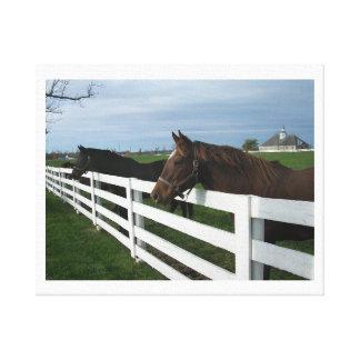 Kentucky Horse Country Gallery Wrap Canvas