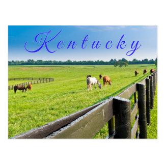 Kentucky Postcard. Horses at horse farm. Postcard