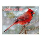 Kentucky State Bird - Northern Cardinal Postcard