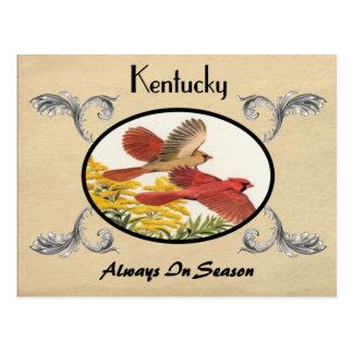 Kentucky State Bird Old Postcard