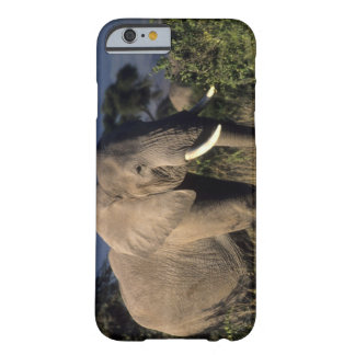 Kenya: Amboseli, male African elephant Barely There iPhone 6 Case