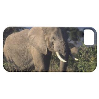 Kenya: Amboseli, male African elephant iPhone 5 Cover