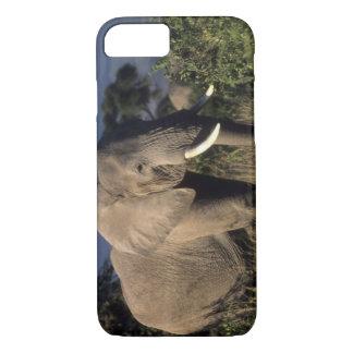 Kenya: Amboseli, male African elephant iPhone 7 Case