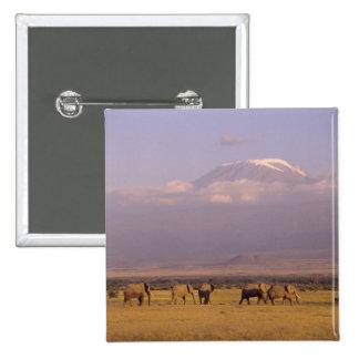 Kenya: Amboseli National Park, elephants and 15 Cm Square Badge