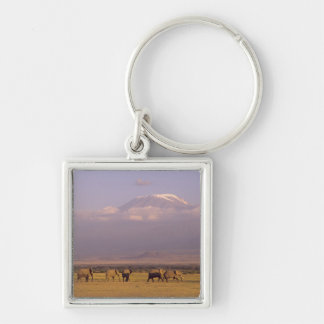 Kenya: Amboseli National Park, elephants and Silver-Colored Square Key Ring