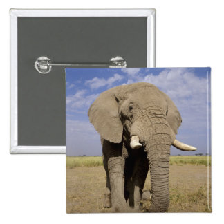 Kenya: Amboseli National Park, male elephant 15 Cm Square Badge