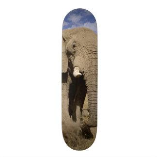 Kenya: Amboseli National Park, male elephant 21.6 Cm Old School Skateboard Deck