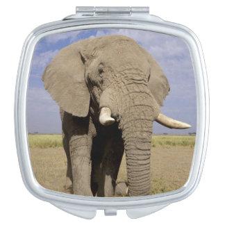 Kenya: Amboseli National Park, male elephant Compact Mirrors
