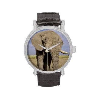 Kenya: Amboseli National Park, male elephant Wristwatch