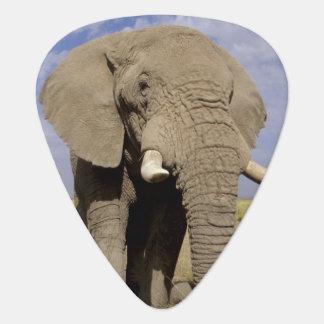 Kenya: Amboseli National Park, male elephant Guitar Pick