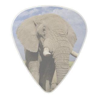 Kenya: Amboseli National Park, male elephant Acetal Guitar Pick