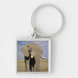 Kenya: Amboseli National Park, male elephant Silver-Colored Square Key Ring