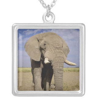 Kenya: Amboseli National Park, male elephant Silver Plated Necklace