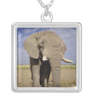 Kenya: Amboseli National Park, male elephant Square Pendant Necklace