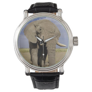 Kenya: Amboseli National Park, male elephant Watch