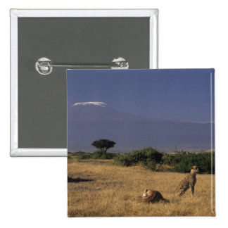 Kenya: Amboseli, two cheetahs ('Acinonyx 15 Cm Square Badge