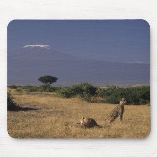 Kenya Amboseli two cheetahs Acinonyx Mousepad
