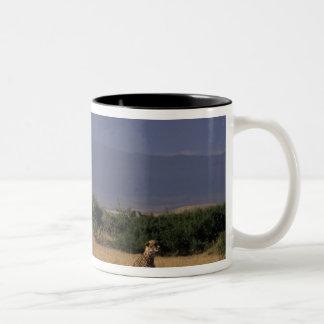 Kenya: Amboseli, two cheetahs ('Acinonyx Two-Tone Coffee Mug
