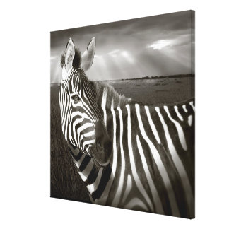 Kenya. Black & white of zebra and plain. Canvas Print