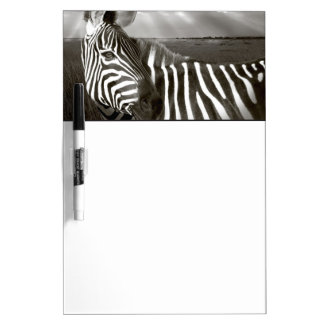 Kenya. Black & white of zebra and plain. Dry Erase Board