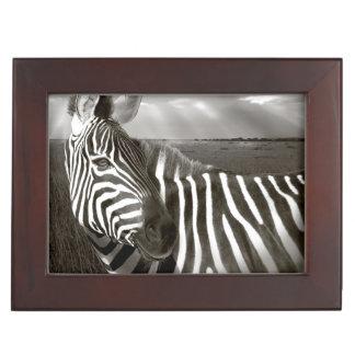 Kenya. Black & white of zebra and plain. Keepsake Box