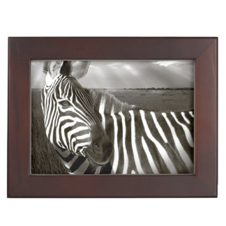 Kenya. Black & white of zebra and plain. Keepsake Boxes