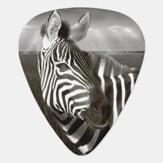 Kenya. Black & white of zebra and plain. Plectrum