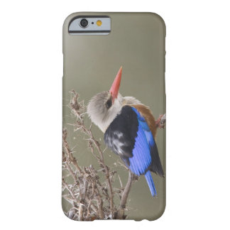 Kenya. Close-up of gray-headed kingfisher Barely There iPhone 6 Case