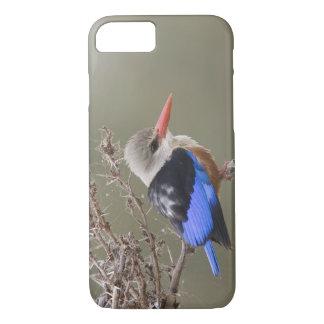 Kenya. Close-up of gray-headed kingfisher iPhone 7 Case