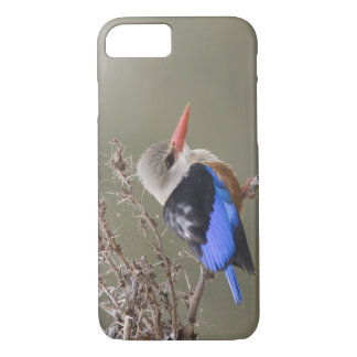 Kenya. Close-up of gray-headed kingfisher iPhone 8/7 Case