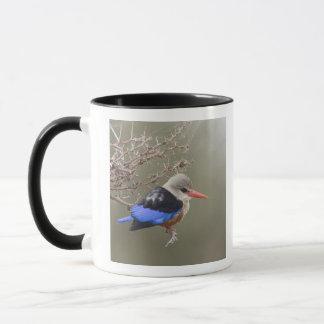 Kenya. Close-up of gray-headed kingfisher Mug