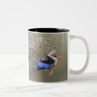 Kenya. Close-up of gray-headed kingfisher Two-Tone Coffee Mug