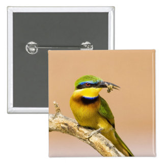 Kenya. Close-up of little bee-eater bird on limb 15 Cm Square Badge
