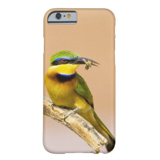 Kenya. Close-up of little bee-eater bird on limb Barely There iPhone 6 Case