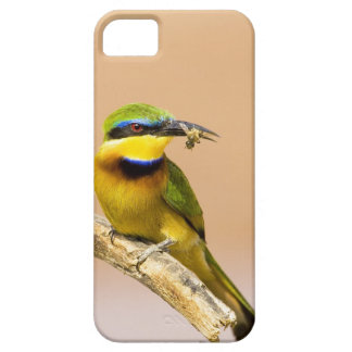 Kenya. Close-up of little bee-eater bird on limb Case For The iPhone 5
