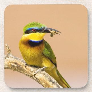 Kenya. Close-up of little bee-eater bird on limb Coaster