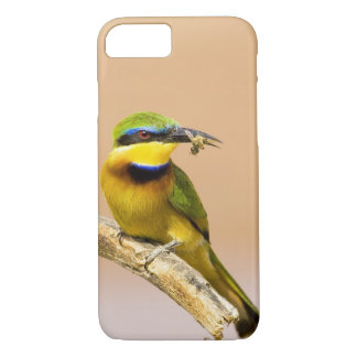 Kenya. Close-up of little bee-eater bird on limb iPhone 8/7 Case