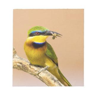 Kenya. Close-up of little bee-eater bird on limb Notepad