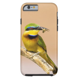 Kenya. Close-up of little bee-eater bird on limb Tough iPhone 6 Case