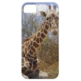 Kenya: Laikipia Plateau, Loisaba Wilderness Case For The iPhone 5