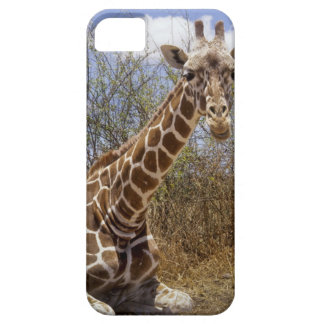 Kenya: Laikipia Plateau, Loisaba Wilderness iPhone 5 Cases