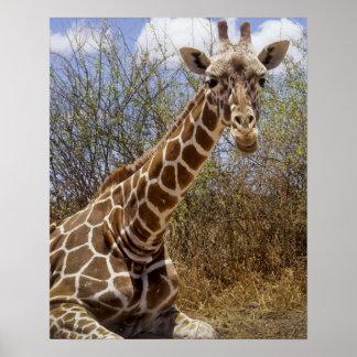Kenya: Laikipia Plateau, Loisaba Wilderness Poster