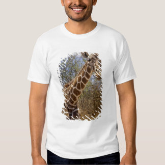 Kenya: Laikipia Plateau, Loisaba Wilderness T Shirt
