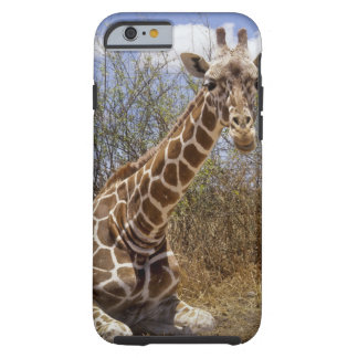 Kenya: Laikipia Plateau, Loisaba Wilderness Tough iPhone 6 Case