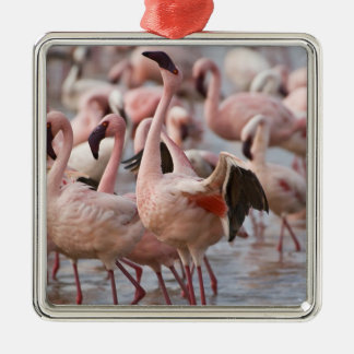 Kenya, Lake Nakuru National Park. Flamingos wade Christmas Ornament