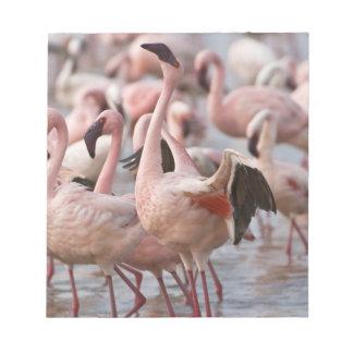 Kenya, Lake Nakuru National Park. Flamingos wade Notepad