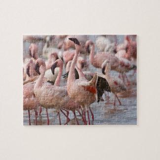 Kenya, Lake Nakuru National Park. Flamingos wade Puzzle