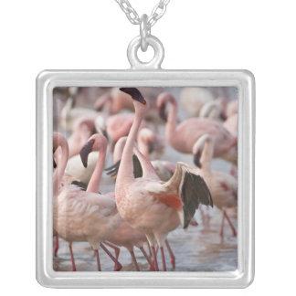Kenya, Lake Nakuru National Park. Flamingos wade Silver Plated Necklace