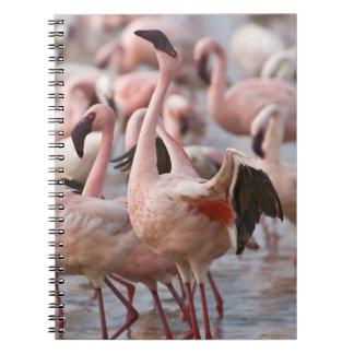 Kenya, Lake Nakuru National Park. Flamingos wade Spiral Notebook