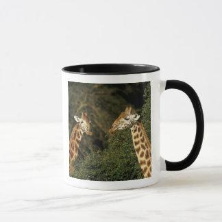Kenya: Lake Nakuru National Park, Rothschild 2 Mug